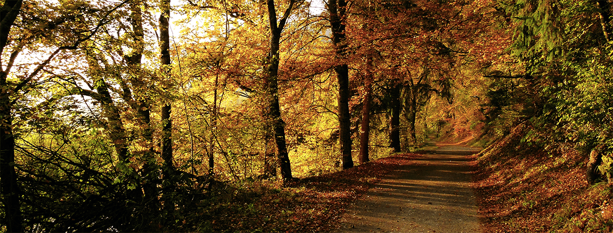 Autumn coulured trees in the New Forest